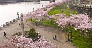 ポートランド市 ウィラメット川沿い トム・マッコール公園